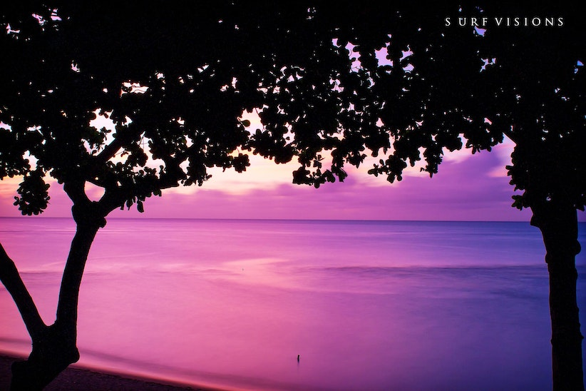 Purple Haze - Haleiwa , Oahu - Hawaii