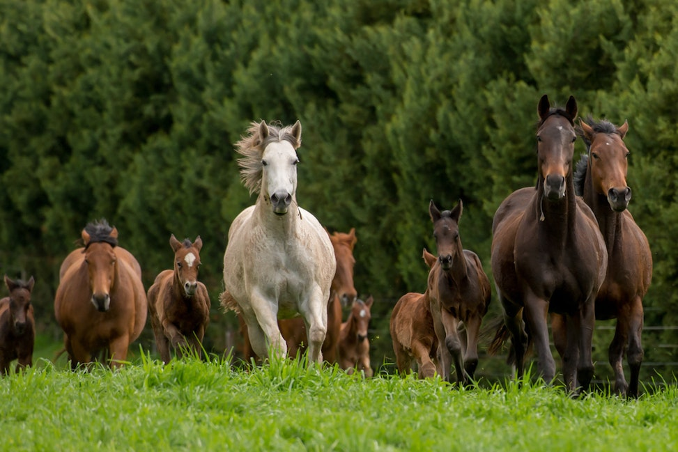 Swettenham Mares and Foals_25-08-13_0133