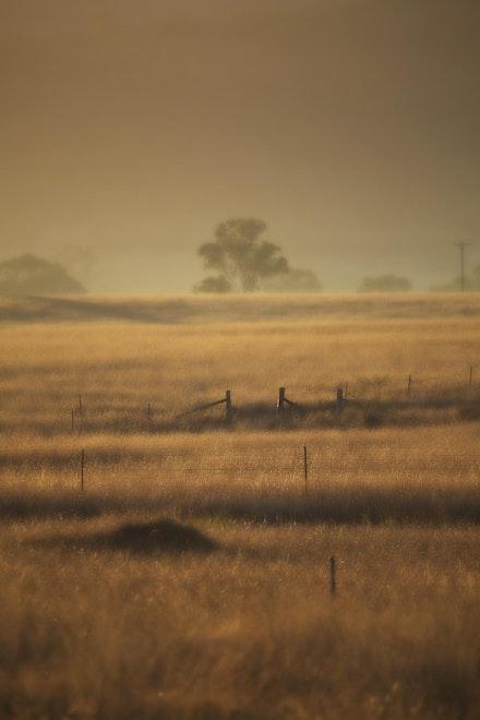 Mist IMG_1381