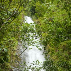 Manoa Falls Trail Hawaii