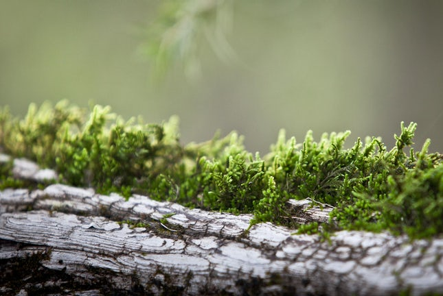 Symbiotic love.. - New England Tablelands, NSW, Australia.