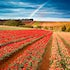 Tulip Field - Table Cape - As I was driving to Stanley, I was reminded of the tulip fields located at Table Cape in the North West of Tasmania. Being the...