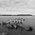 21 Pelicans Batemans Bay - Each archival photograph is stamped and signed by Robert and a brief description of how it was taken. The options are as follows: -...