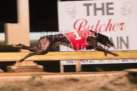Greyhounds 071015-15