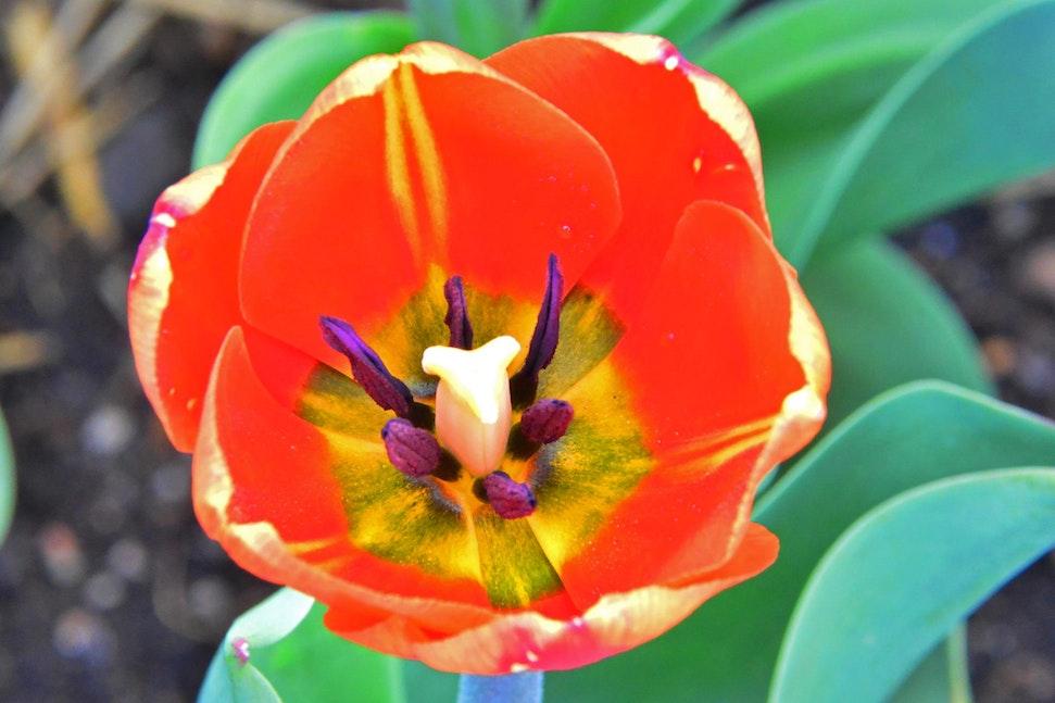 2014_Arboretum_Mom_5820_edited-1