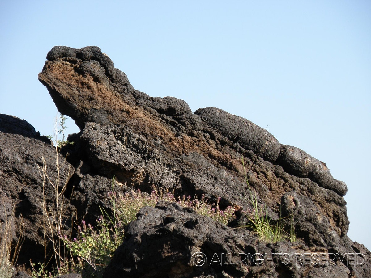 Lava Lizard - Do you see what I see? Found this lava lizard in New Mexico! Can you guess where?