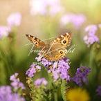 Macro Bugs, Butterflies, Bee's - Bugs, Butterflies, Bee's etc