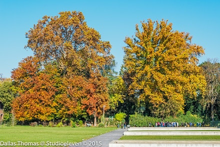 Big old trees - 3263-Edit