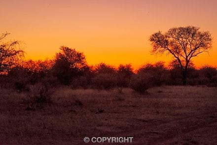 020 Tanda Tula 300415-7833-Edit - Brillant orange red sunset at Tanda Tulla Game Reserve in South Africa.