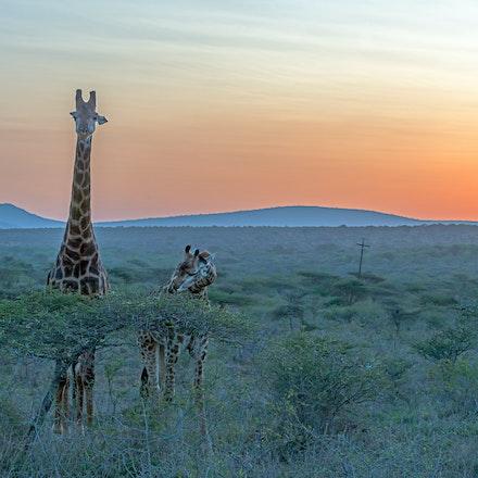 021 Thanda Safari Lodge 030515-8005-Edit-2