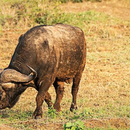 021 Thanda Safari Lodge 030515-8319-Edit