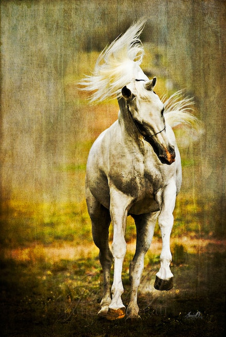Spirit of the White Stallion - The mount of kings... Original image by Sharon Meyers Photography.