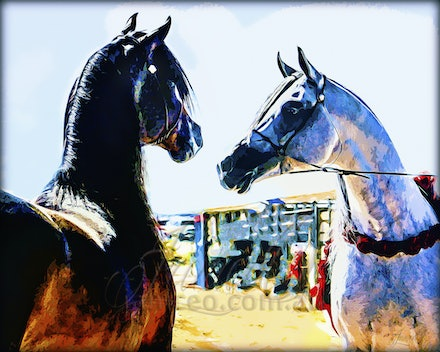 Art of the Arabian Horse - The mounts of kings, as much a creature of light and beauty as an animal of substance and loyalty. Digital art of the most beautiful...