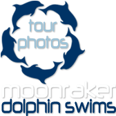 Moonraker Dolphin Swims - Tour Photos