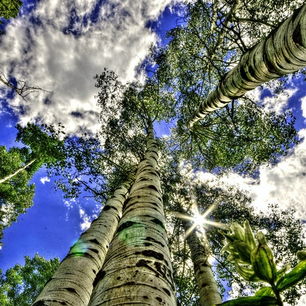 Partly sunny  7.10.2015.16 - Partly sunny. Aspen trees reach for the heavens in Rocky Mountain National Park. Vail, Colorado. #trees #vail #colorado #aspens...