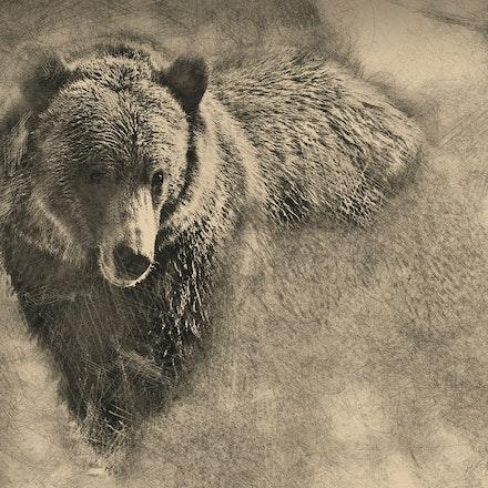 Bear Pencil 24x20